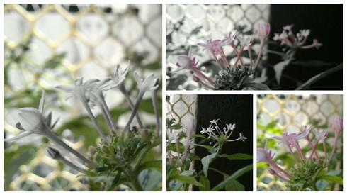 Nokia Refocus Collage